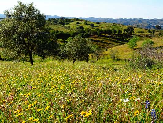 Blick ins Land ... die Algarve im März