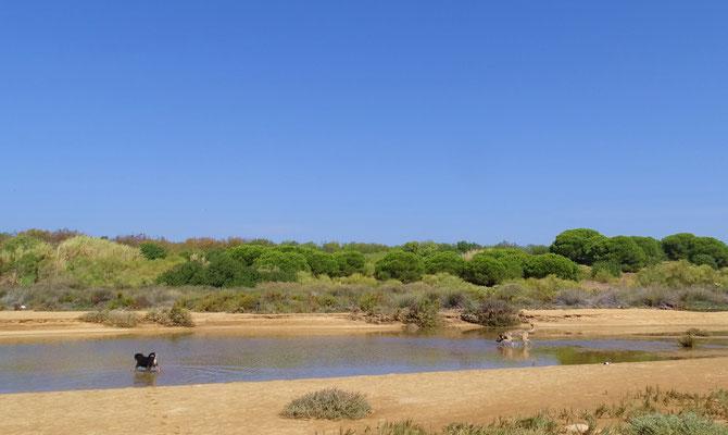 willkommene Abkühlung in der kleinen Lagune für Niko und Luke