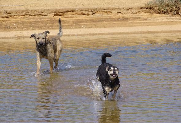 Wasserfreuden für die Hunde