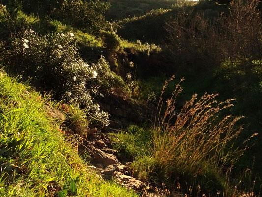 stehen bleiben und geniessen ... diese Harmonie in der Natur ist Balsam für die Seele