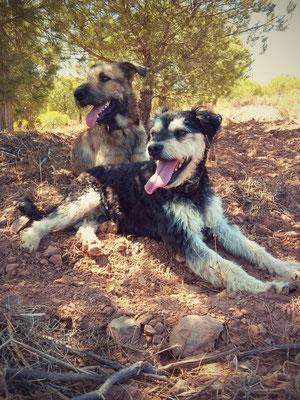 unseren beiden Vierbeinern gefällt es, auf dem Grundstück herumzustromern und zwischendurch kleine Pausen im Schatten der Bäume einzulegen  : )