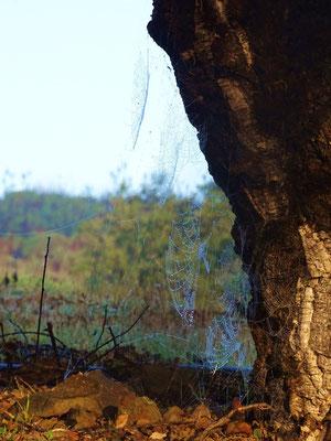 ein Spinnenkunstwerk