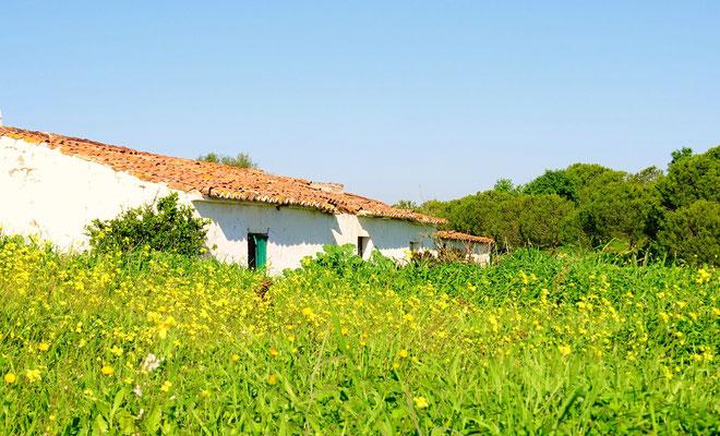 November im Valongo ... dieser idyllische verlassene Hof in der Nachbarschaft und der prächtige Klee sind eine Augenweide