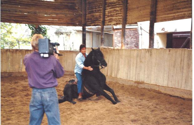 Sein Hengst raste ohne ihn in die Halle und stieg auf Pfiff vor Kameramann Norbert. Der setzte sich vor Schreck auf den Hosenboden ... :-)
