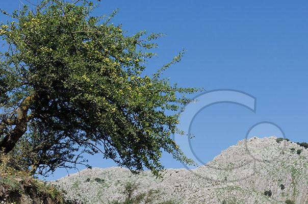 Rocca del Crasto