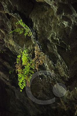 Fledermaushöhle in den Necropoli di Pantalica