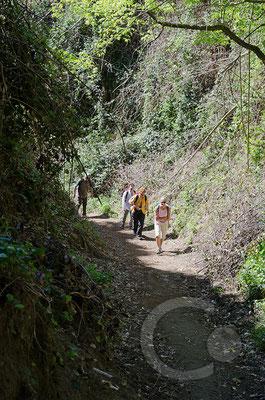 130423_RAW2202 Wanderweg zum Gipfel des Monte Epomeo