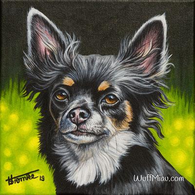 """Balu"" Chihuahua, Acrylgemälde 20x20, Hundemalerei und Katzenmalerei ""WuffMiau"" Künstlerin Hanna Stemke"