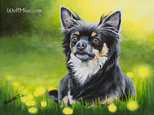 """Balu"" Chihuahua, Acrylgemälde 40x30, Hundemalerei und Katzenmalerei ""WuffMiau"" Künstlerin Hanna Stemke (Fotovorlage von Katja Podobnig)"