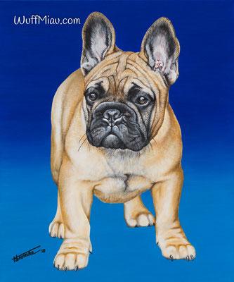 """Felix de Mont Boule"" Französische Bulldogge, Acrylgemälde 60x50, Hundemalerei und Katzenmalerei ""WuffMiau"" Künstlerin Hanna Stemke"