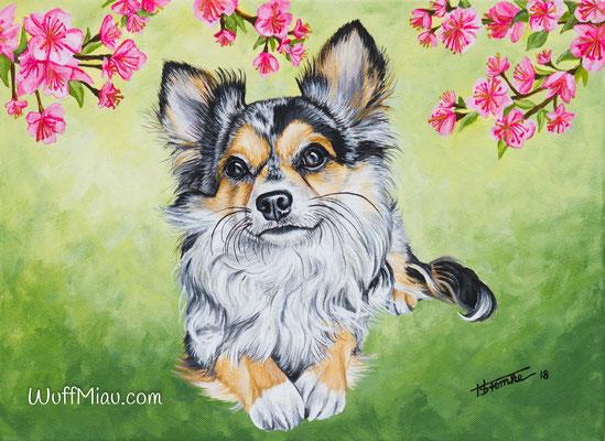 """Buddy"" Chihuahua, Acrylgemälde 40x30, Hundemalerei und Katzenmalerei ""WuffMiau"" Künstlerin Hanna Stemke"