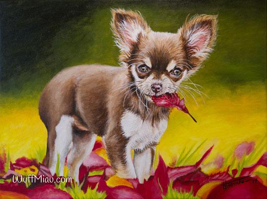 """""""Luna"""" Chihuahua, Acrylgemälde 40x30, Hundemalerei und Katzenmalerei """"WuffMiau"""" Künstlerin Hanna Stemke (Fotovorlage von Natalie Große)"""