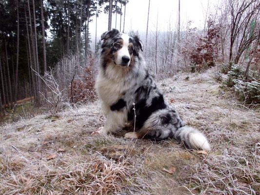 Der süße Samu ist geprüfter Therapiehund