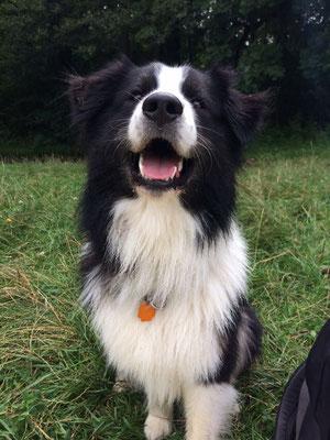 Oskar ist ebenfalls glücklicher Familienhund