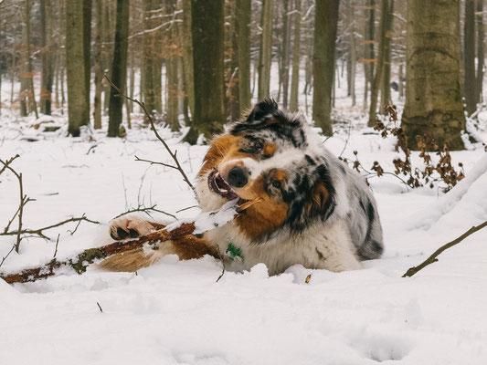 Elvis lebt in Berlin als Familienhund und begleitet Frauchen überall hin