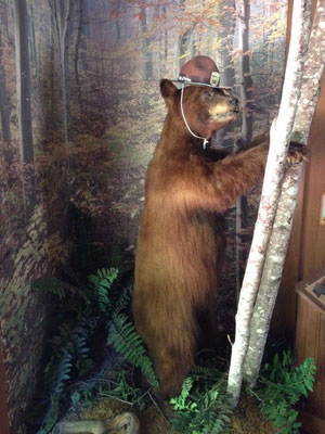 Vrai ou faux ours ?