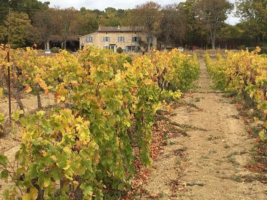 Un mas dans les vignobles