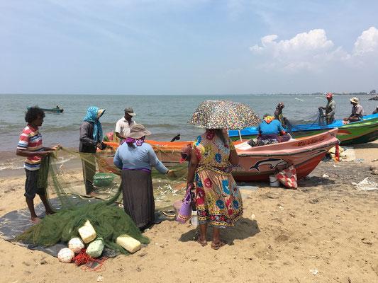 Retour de pêche à Negombo
