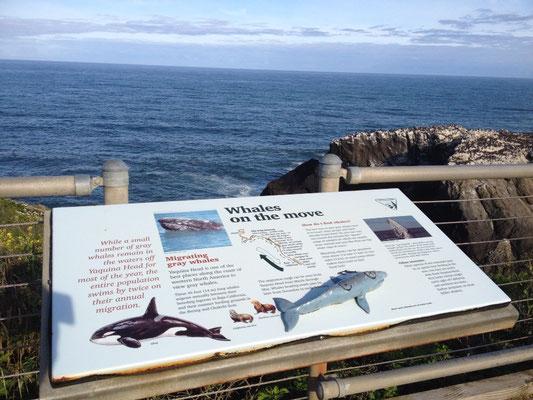 Le territoire des baleines