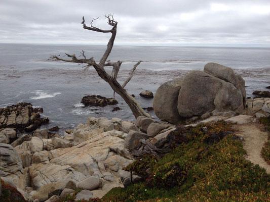 Monterey: Le 17 miles drive