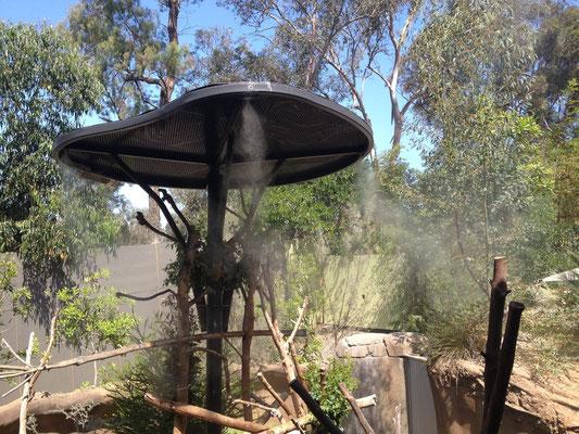 Zoo de San Diego: Les koalas se cachent