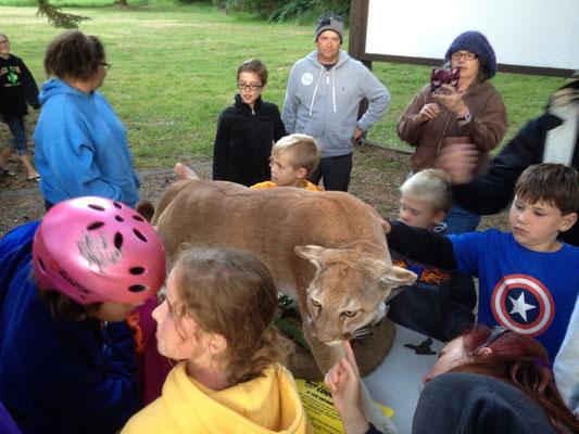 Exposé d'une ranger sur les cougars