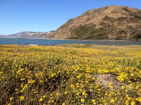 Fleurs sur la lagune de Pétrolia