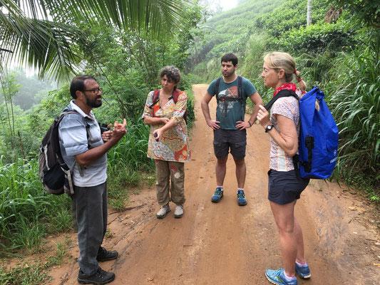 Visite guidée de la forêt de Sinharaja
