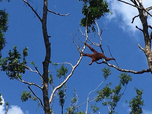 Hoch oben in den Bäumen