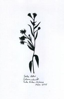 Salz Aster