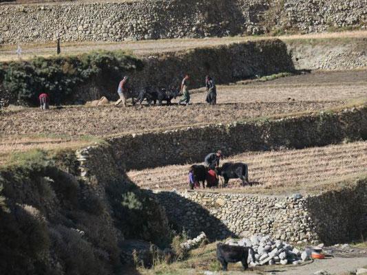 Feldarbeit bei Tetang