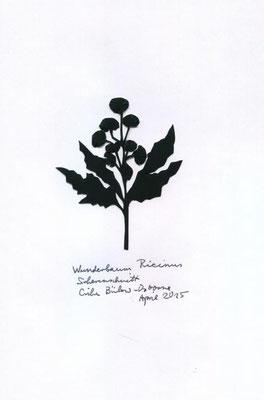 Wunderbaum Ricinus