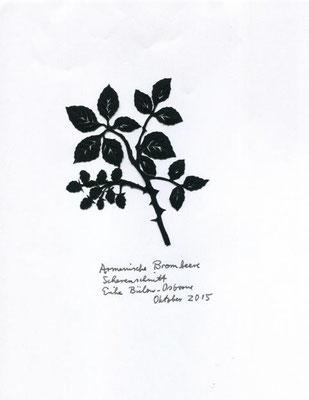 Armenische Brombeere