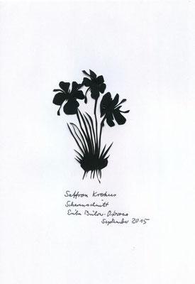 Saffron Krokus