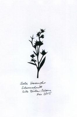 Salz Hasenohr