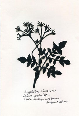 Angelikasinensis