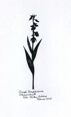 Sumpf Stendelwurz