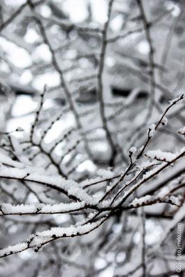 Зимняя паутина.