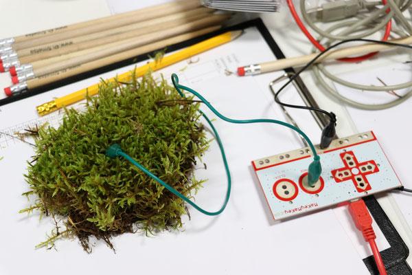 Auch Naturmaterial kann als Eingabegerät für den Komputer dienen.