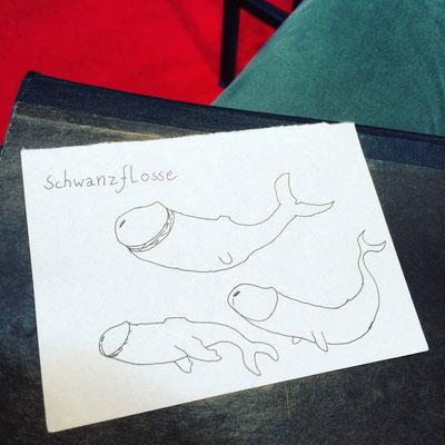 Skizze, Schwanzflosse