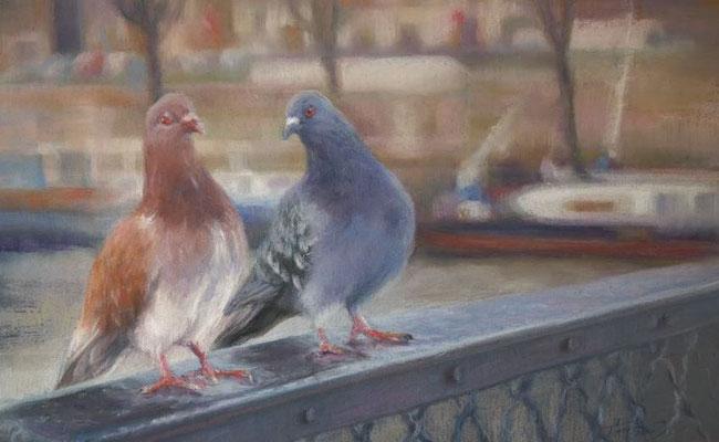 Pigeons 65x45