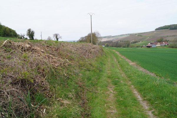 Sur ce chemin rural du Sud de l'Aisne, où l'élagage passe, la biodiversité trépasse !