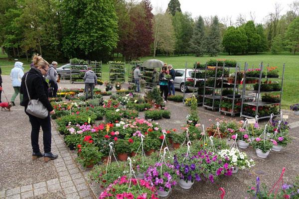 Le Marché aux fleurs de Dormans est l'un des temps forts de l'année...