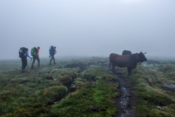 Cows, fog and the beginning of the tour