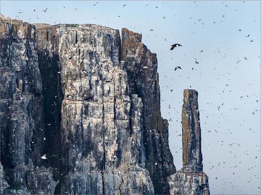 Alkefjellet Vogelfelsen