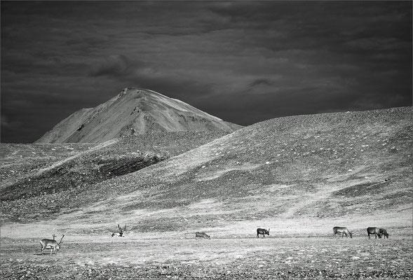 Spitzbergen Bellsund Vårsolbukta