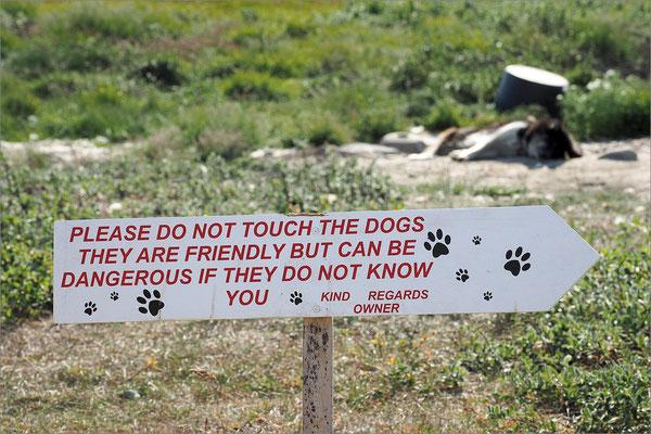 Ilulissat - Schlittenhunde Warnschild