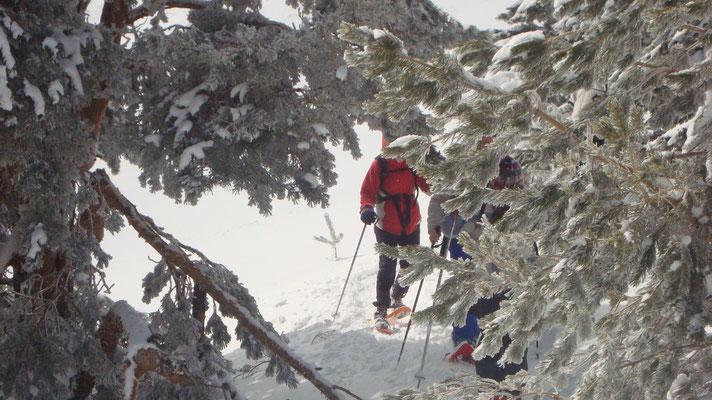 Raquetas de nieve  P.N: Guadarrama