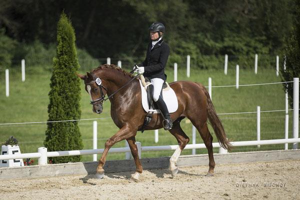 Belfast-B beim Reitpferdechampionat Juli 2019 - 3.Platz mit einer von Wertnote 8,02