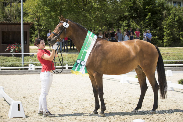 Femina-B   Steirische Landessiegerin 3 Jährig & 3 Platz beim Reitpferdechampionat Steiermark 2017